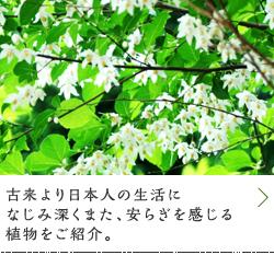 暮らしの中に日本の緑