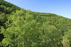 経済林を主とする林業・造林用樹種生産への取り組み