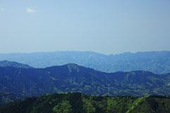 地域や文化など自然環境に配慮した植林用樹種生産への取り組み
